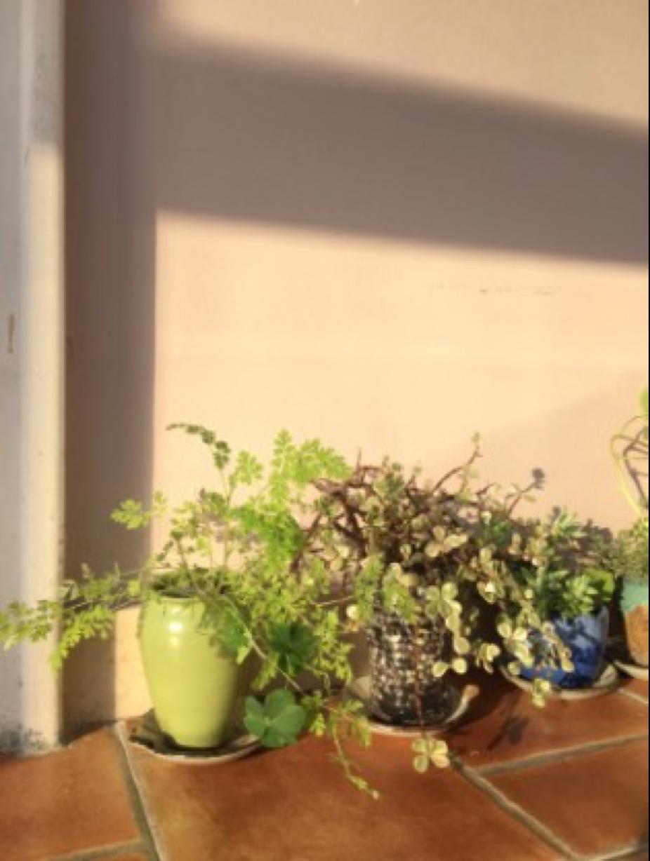 植物-苏州德威英国国际学校