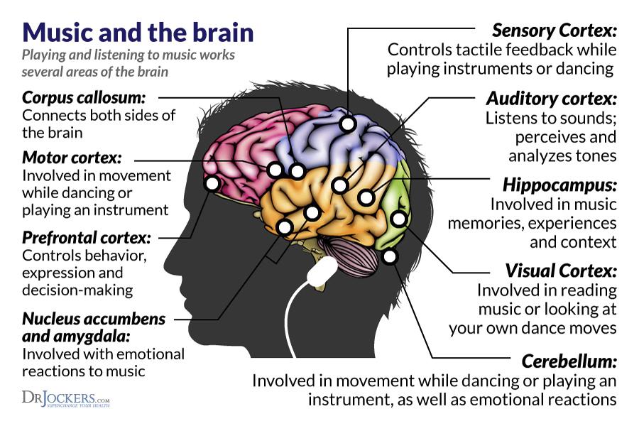 music-brain-Dulwich_International_High_School_Suzhou