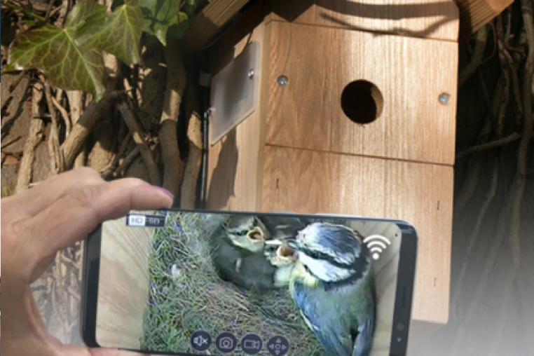 psg-birdcams