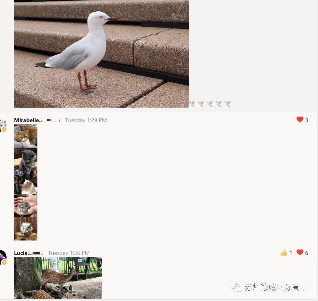 wechat-image-20200311083600-Dulwich_International_High_School_Suzhou